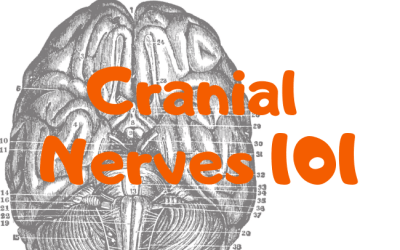 Cranial Nerves 101
