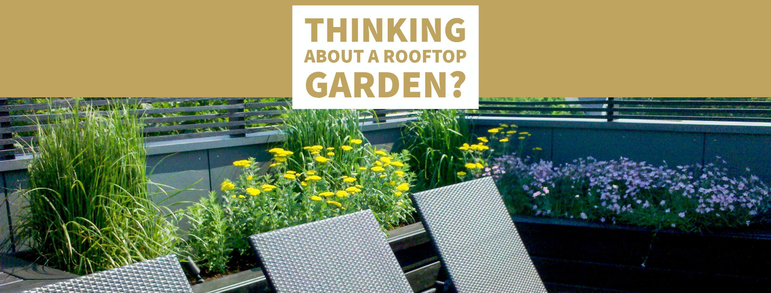 Anne Roberts Gardens Rooftop-Garden-2