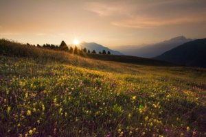 Almwiese im Sonnenuntergang