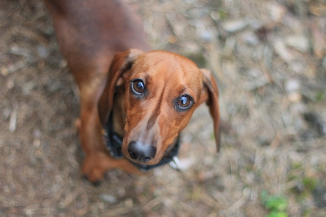 6 Dog Myths That Are Barking Mad!