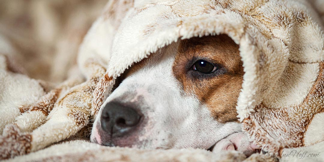 3 Symptoms You Should Never Ignore In Dogs