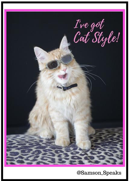 I've got cat style t-shirt