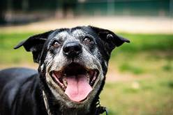 5 Important Care Tips For Older Dogs