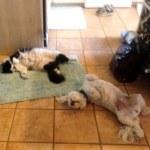 Gracie & Elvis lying down