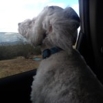 Gracie LOVED to put her head out the window! She enjoyed it so much!