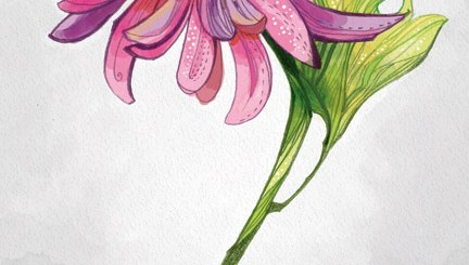 Flower illustration by Anni Betts in pink and purple