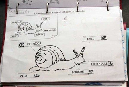 Identifying the body parts of a snail