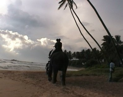 Alyson and james riding into the sunset on an elephant at their wedding in Sri Lanka