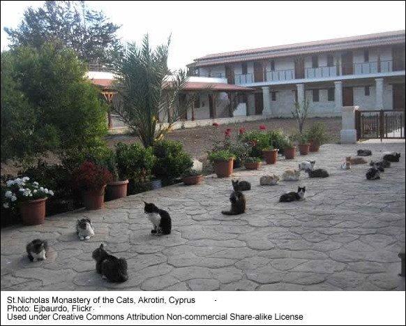 cats-st nicholas_monastery