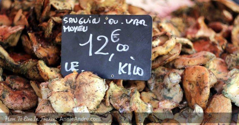 champignon_sanguin-(2)