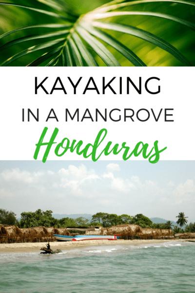 We explore wild life in the mangrove during a tour with Garifuna Tours. Starting in Tela, it was highlight of my trip in Honduras! #kayak #honduras #centralamerica #wildlife