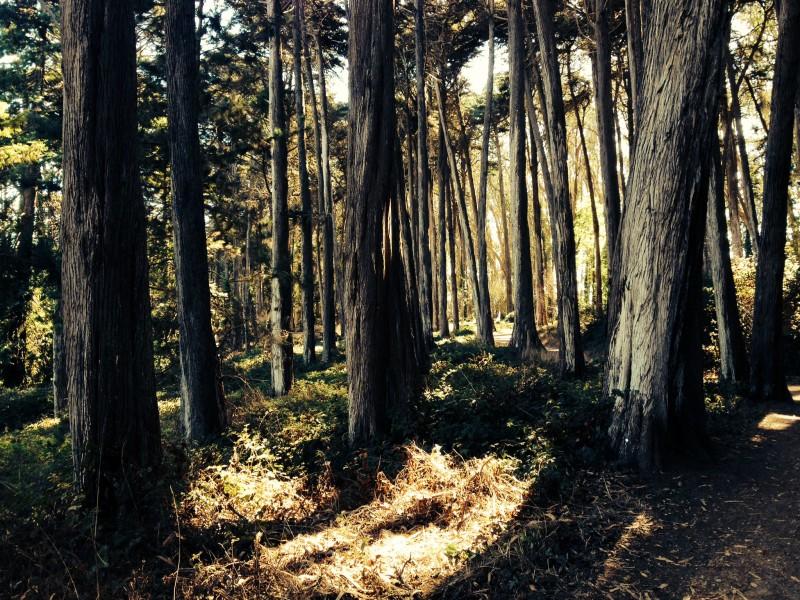 Presidio, the park near the Golden Gate Bridge