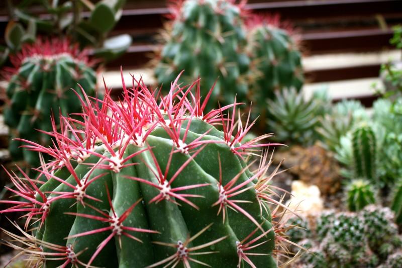 Visit Rio de Janeiro Botanical Garden