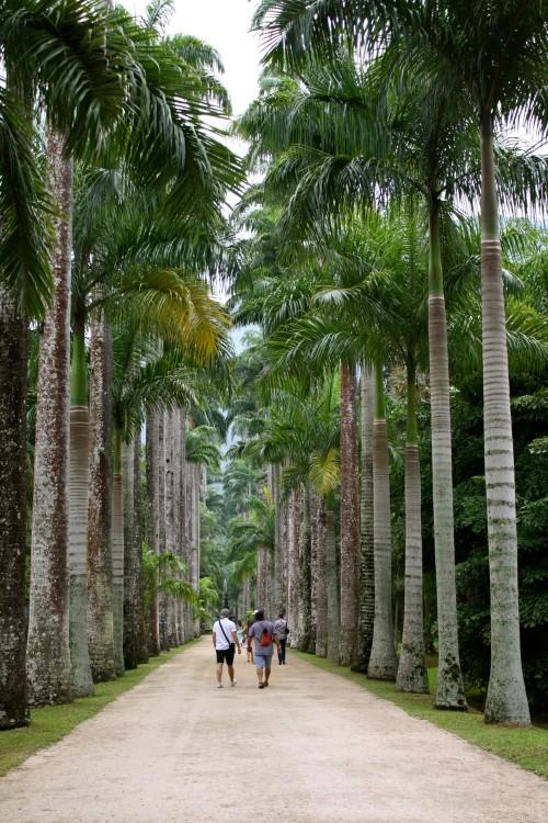 View from Rio Botanical Garden