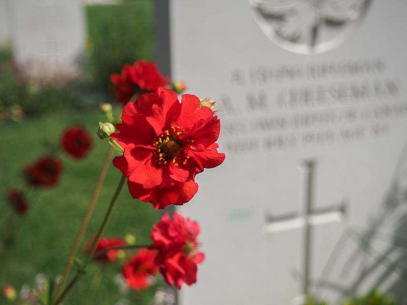 Fleurs sur une tombe d'un soldat Canadien en Normandie.