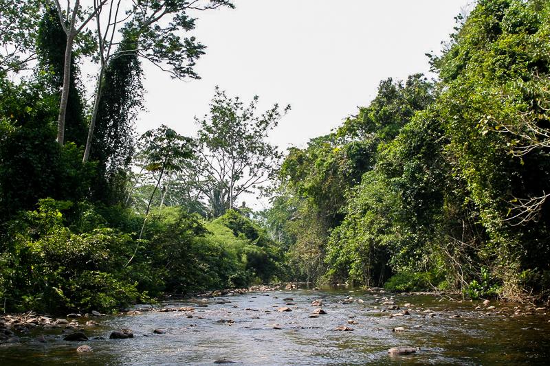 Randonnée dans la forêt tropicale en route vers ATM Cave au Belize