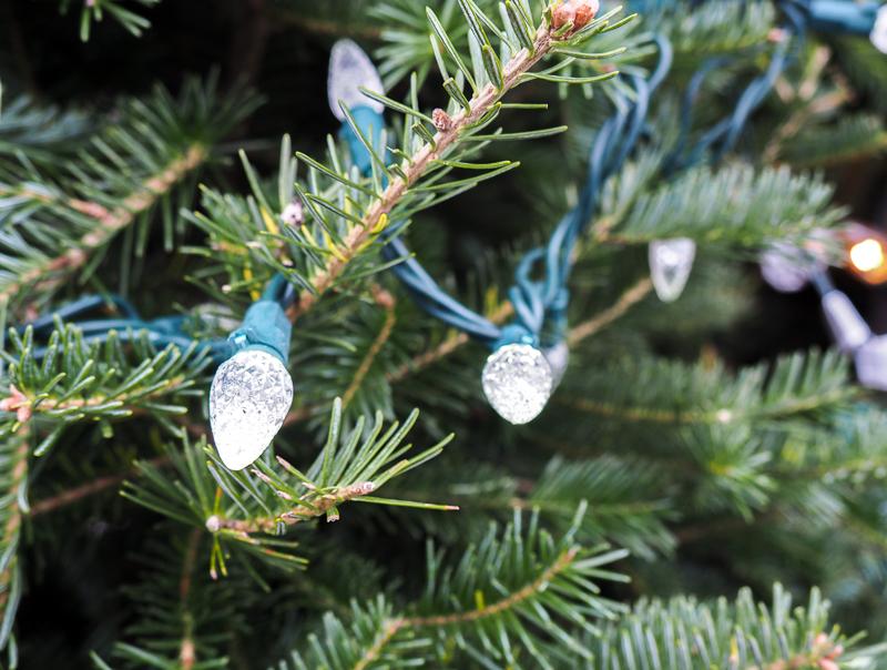 Sapins dans les marchés de Noël du Québec