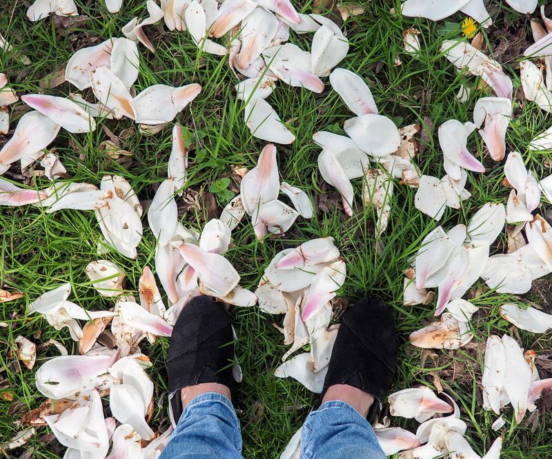 Arbres en fleurs au Bute Park de Cardiff en avril
