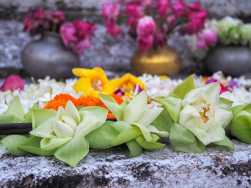 Fleurs en offrante à Bouddha au Sri Lanka