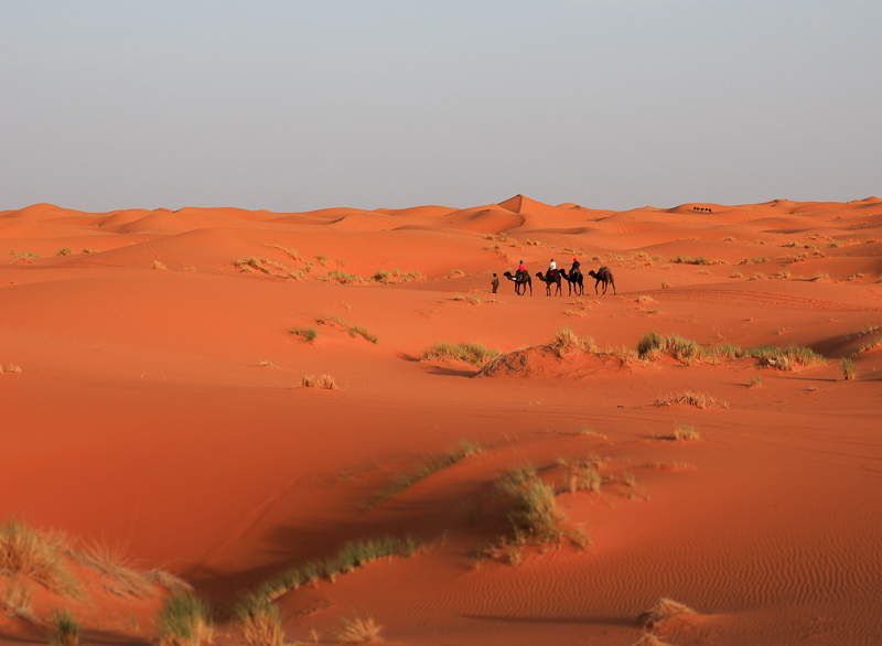 Convoi de chameaux dans le désert du Sahara au Maroc