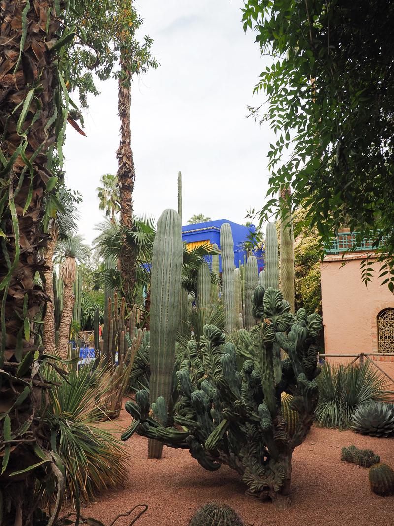 Les cactus sont partout au Jardin Majorelle de Marrakech