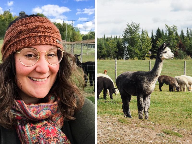 Visite à la ferme Alapagas Sutton pour en apprendre plus sur l'élevage des alpagas