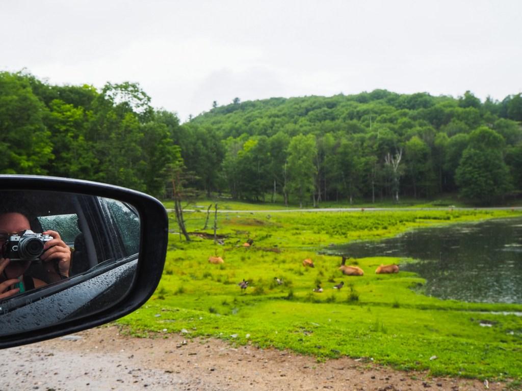 Une visite du Parc Oméga quand il pleut est tout à fait possible. Les animaux sont toujours visibles malgré la pluie.