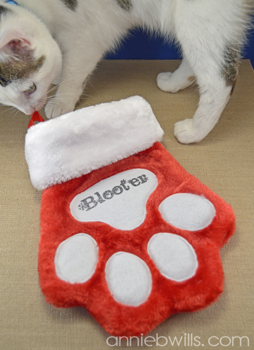 Personalized Pet Stocking by Annie Williams - Photobomb