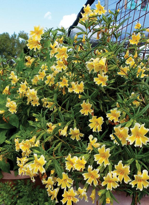 Zone 5b Flowers