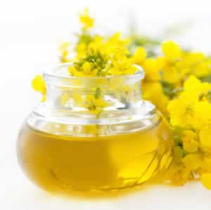rapeseed blossoms and oil common names canola oil rapeseed botanical ...