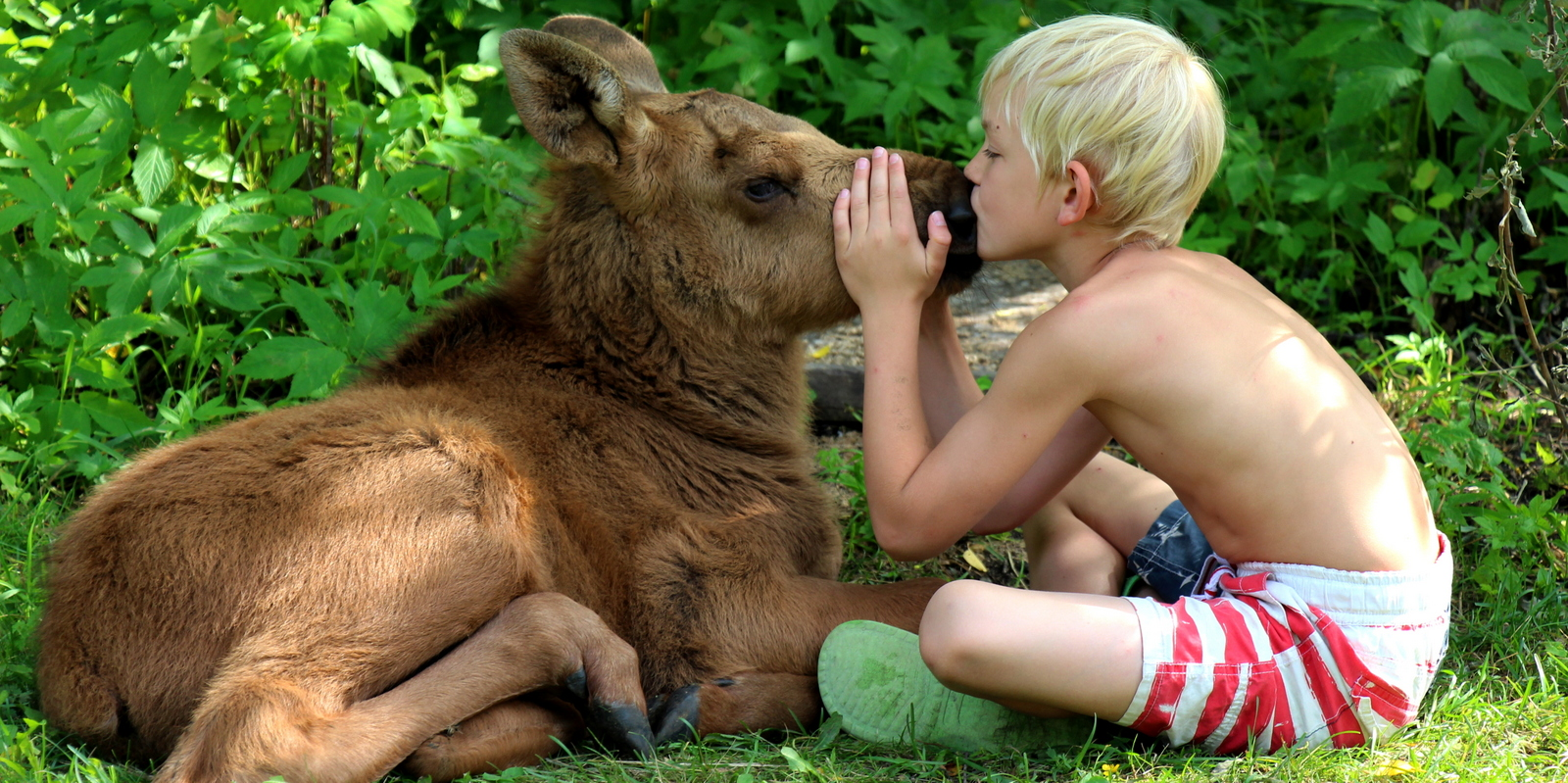 Boy and moose