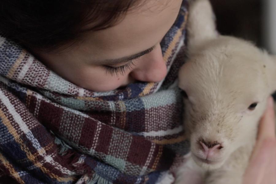 Schaf & Schäfer: Schafpatenschaften übernehmen