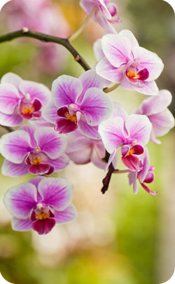 Orchid flower which is the 28th anniversary symbol
