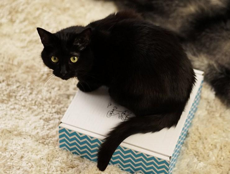 box pour chat