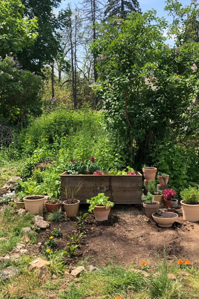 small garden with cedar chest container