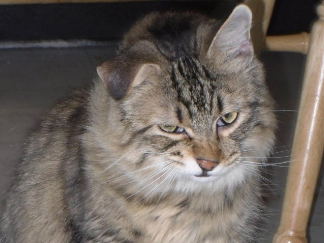 Anorak News Cats Sneezing 10 Photos Of Cats Mid Sneeze