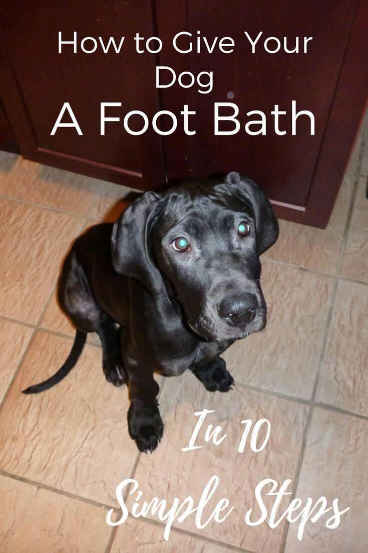 Read the hilarious account of how I ended up giving my dog puppy pedicures!