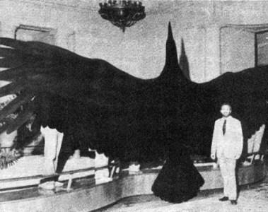 giant bird taxidermy