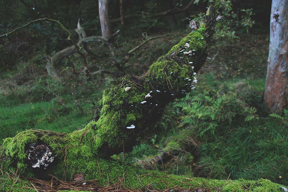 Tree overgrown with moss and mushrooms
