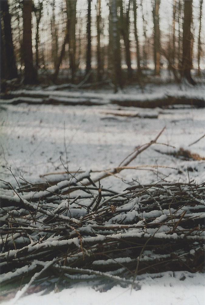 Snow in Kralingse Bos