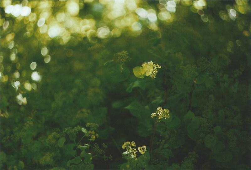 Sunlight | another reverie