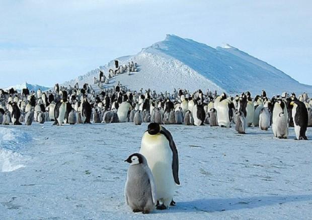 Antartide, scoperte dallo spazio 11 colonie di pinguini - Terra & Poli - ANSA.it