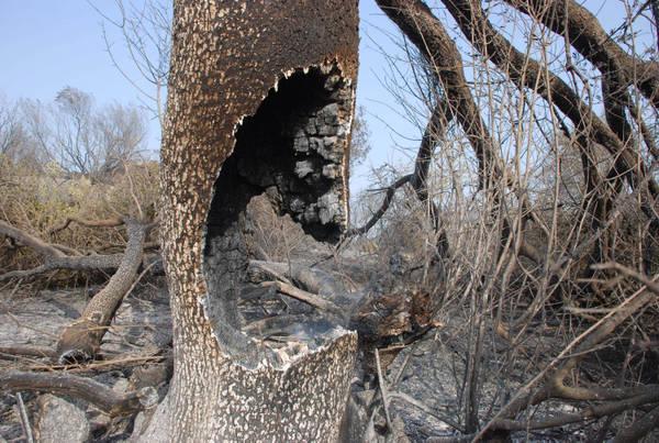 global warming mandera' in fumo parte foreste Canada