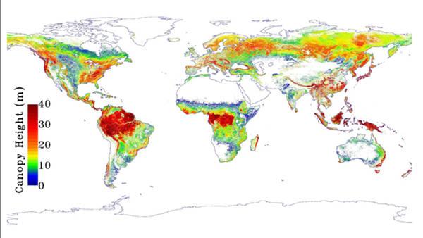 AMBIENTE: FORESTE TROPICALI PIU' ALTE DEL PREVISTO
