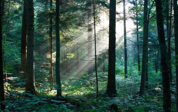 Iucn, vicini a recupero 50 mln ettari foreste