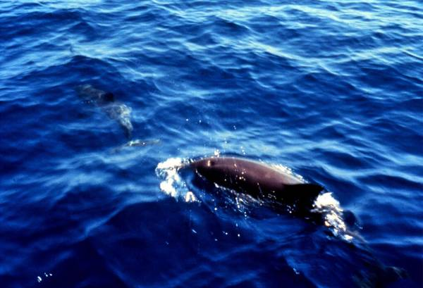 Sea Shepard, Mediterraneo rischia la distruzione