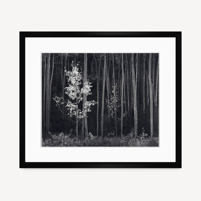 Aspens, Horizontal. Black Wood Frame