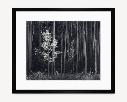 Aspens, Horizontal. Black Wood Frame