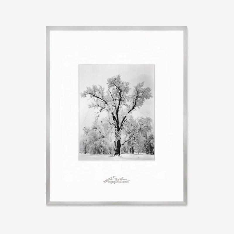 Oak Tree, Snowstorm