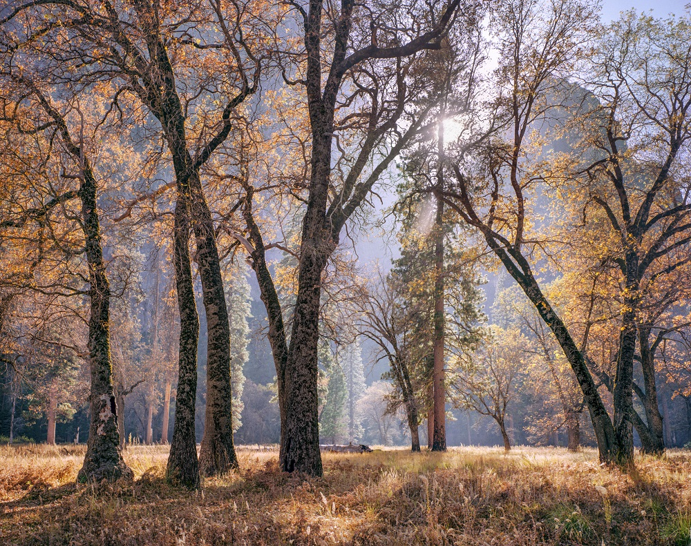 Charles Cramer commemorates 40 years exhibiting in Yosemite National Park